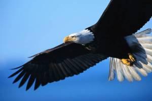 Eagle_FMF